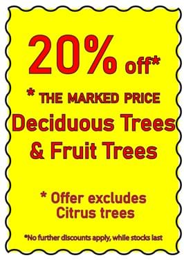Don't miss this 20% off Deciduous & Fruit trees for short time only