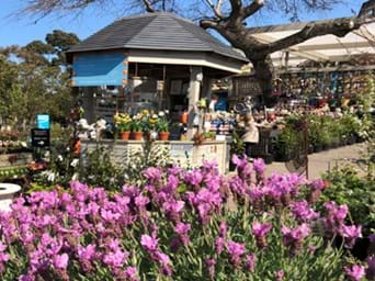 Poyntons Nursery And Garden Centre Garden Centre Cafe Furniture And Homewares In Melbourne Products And Services